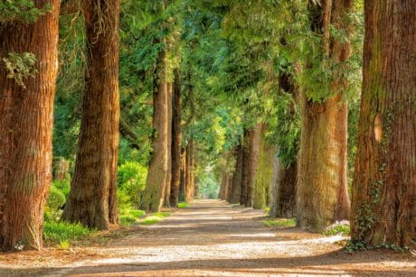 wood, tree, landscape, road, nature, leaf, forest, plant