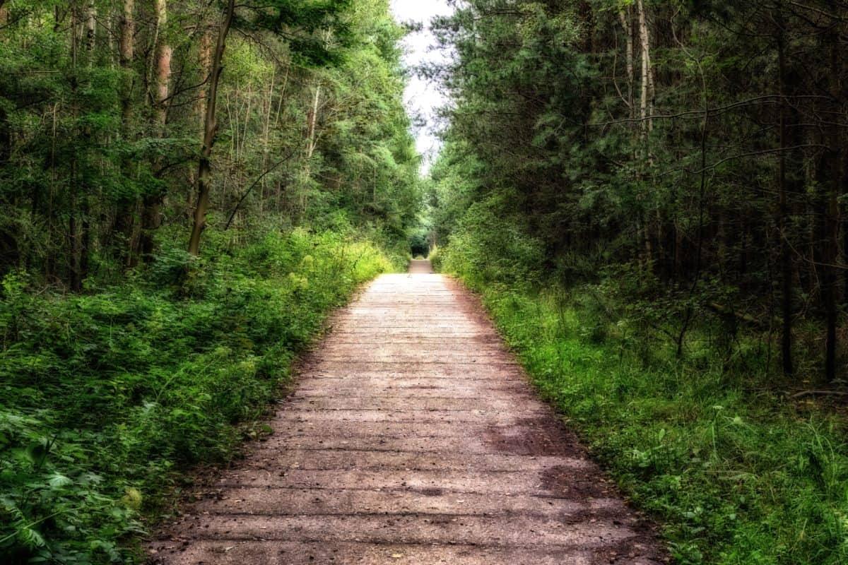 hoja de madera, camino, árbol, sendero, naturaleza, camino, paisaje
