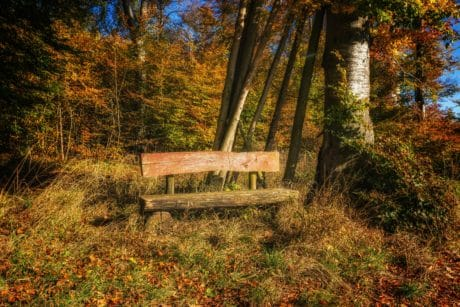 landscape, bench, leaf, wood, nature, tree, forest, autumn