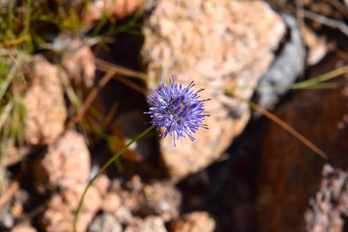 natura, flora, wildflower, erba, pianta, pietra, luce naturale, all'aperto