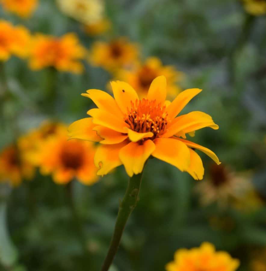 fleurs sauvages, nature, flore, été, pétale, jardin, herbe, plante