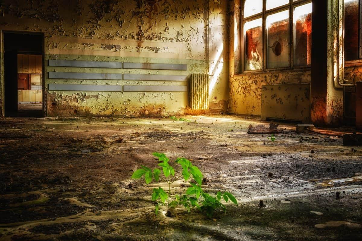 ventana, interior, edad, suelo, edad,