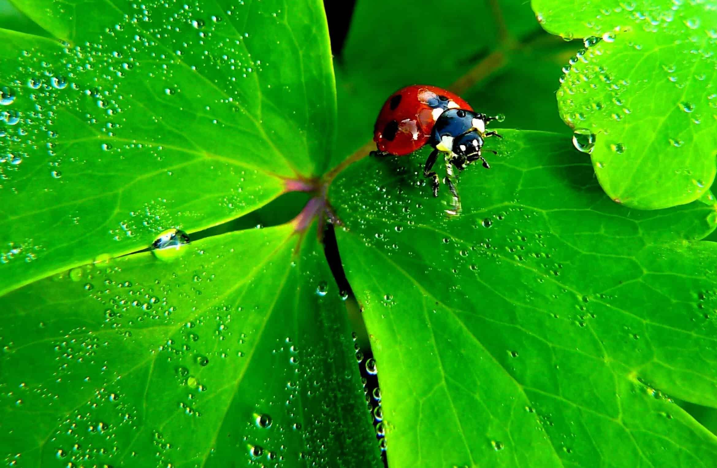 Free picture: nature, rain, garden, leaf, ladybug, flora ...