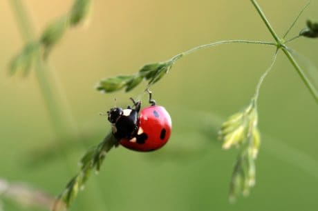 insect, beetle, nature, ladybug, green leaf, macro, arthropod, bug, plant