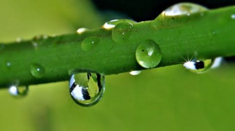 Flora, foglia, natura, pioggia, goccia, rugiada, l'umidità, macro