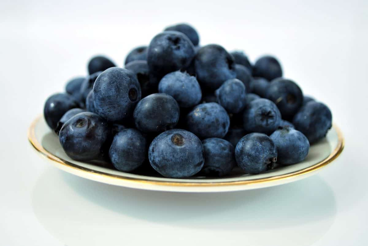 bleuet, berry, sweet, fruit, nourriture, alimentation, antioxydant, organique