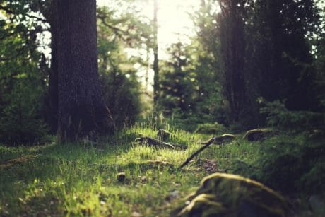 wood, tree, landscape, ecology, nature, forest, wilderness, green grass, ground