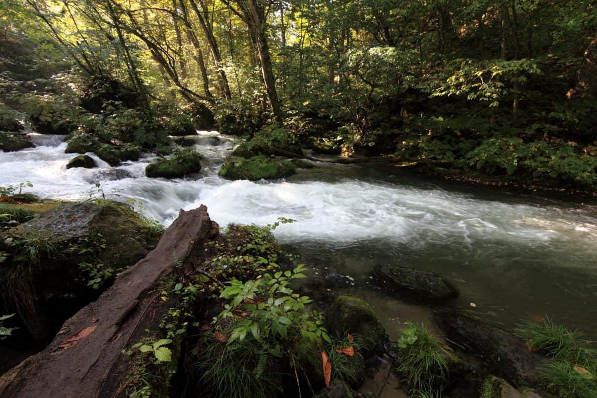 forêt, nature, rivière, bois, paysage, stream, eau