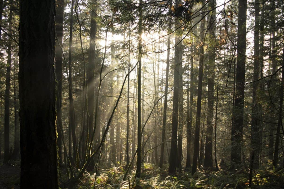 leaf, nature, wood, mist, landscape, tree, fog, forest, sunlight
