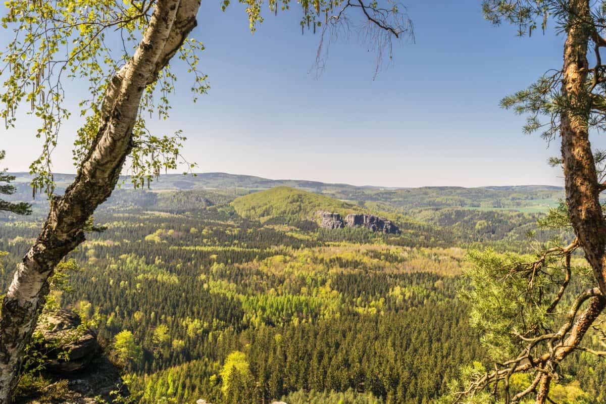legno, albero, natura, paesaggio, cielo, foresta, montagna