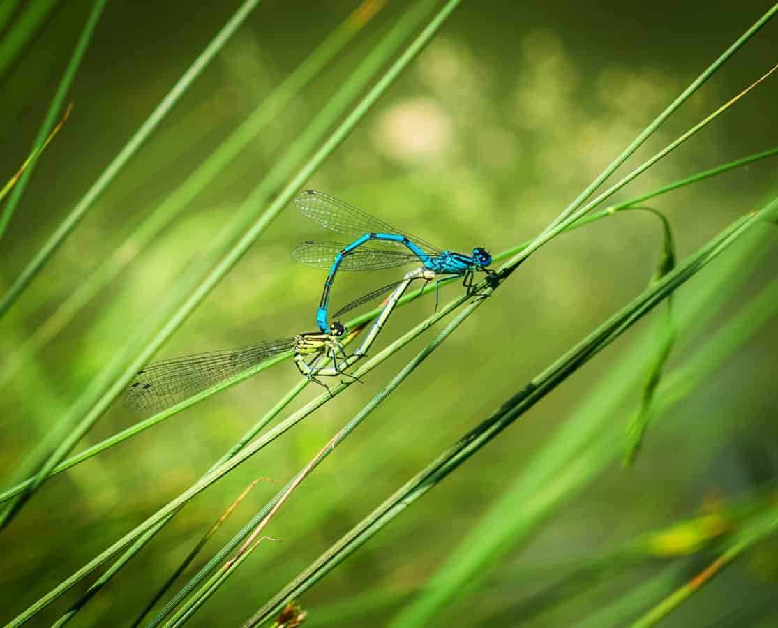 dragonfly, grass, insect, nature, green leaf, wildlife, animal, macro