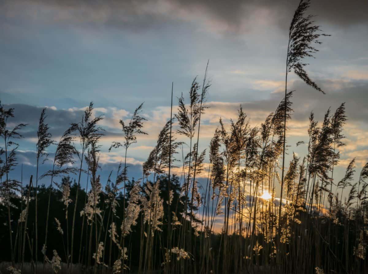 sunset, landscape, dawn, silhouette, sky, nature, sun, shadow