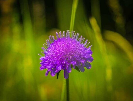 flore, jardin, fleurs sauvages, herbe, nature, été, herbe, plante