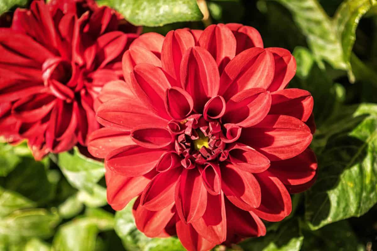 nature, leaf, garden, wildflower, flora, summer, petal, plant