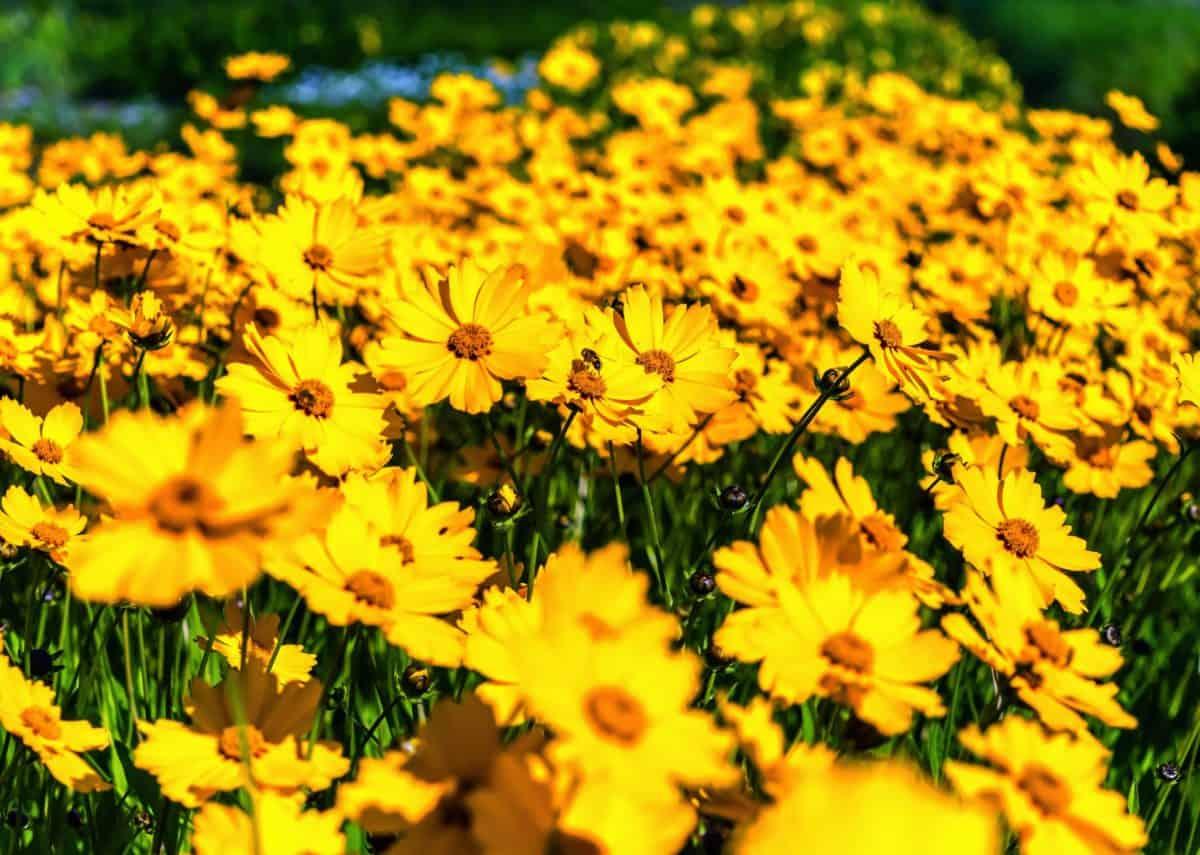 flora, verano, flor, campo, jardín, naturaleza, hierba, planta