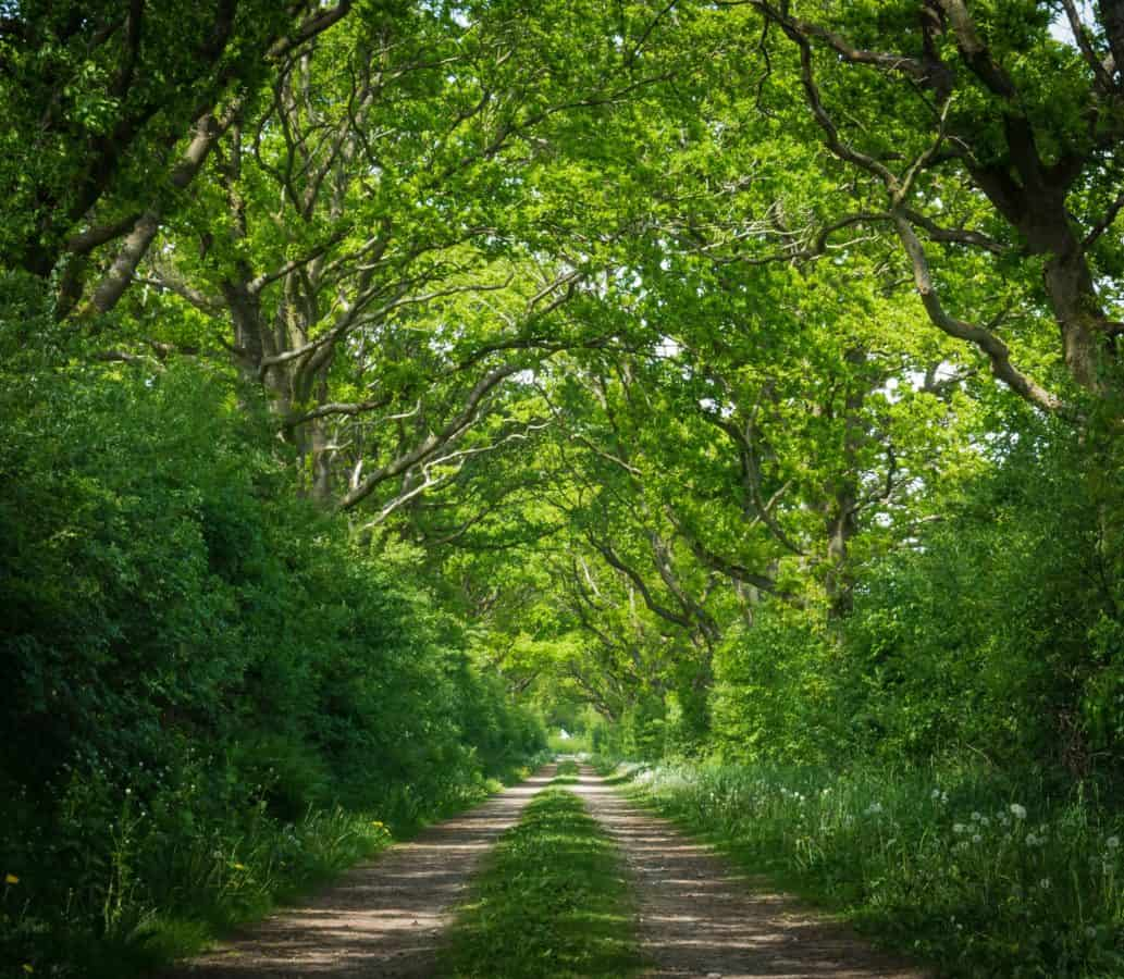 road, tree, nature, wood, landscape, environment, road, forest