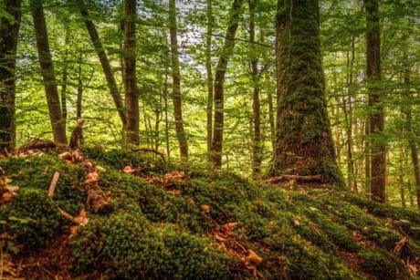 moss, hill, wood, tree, leaf, environment, nature, landscape, forest