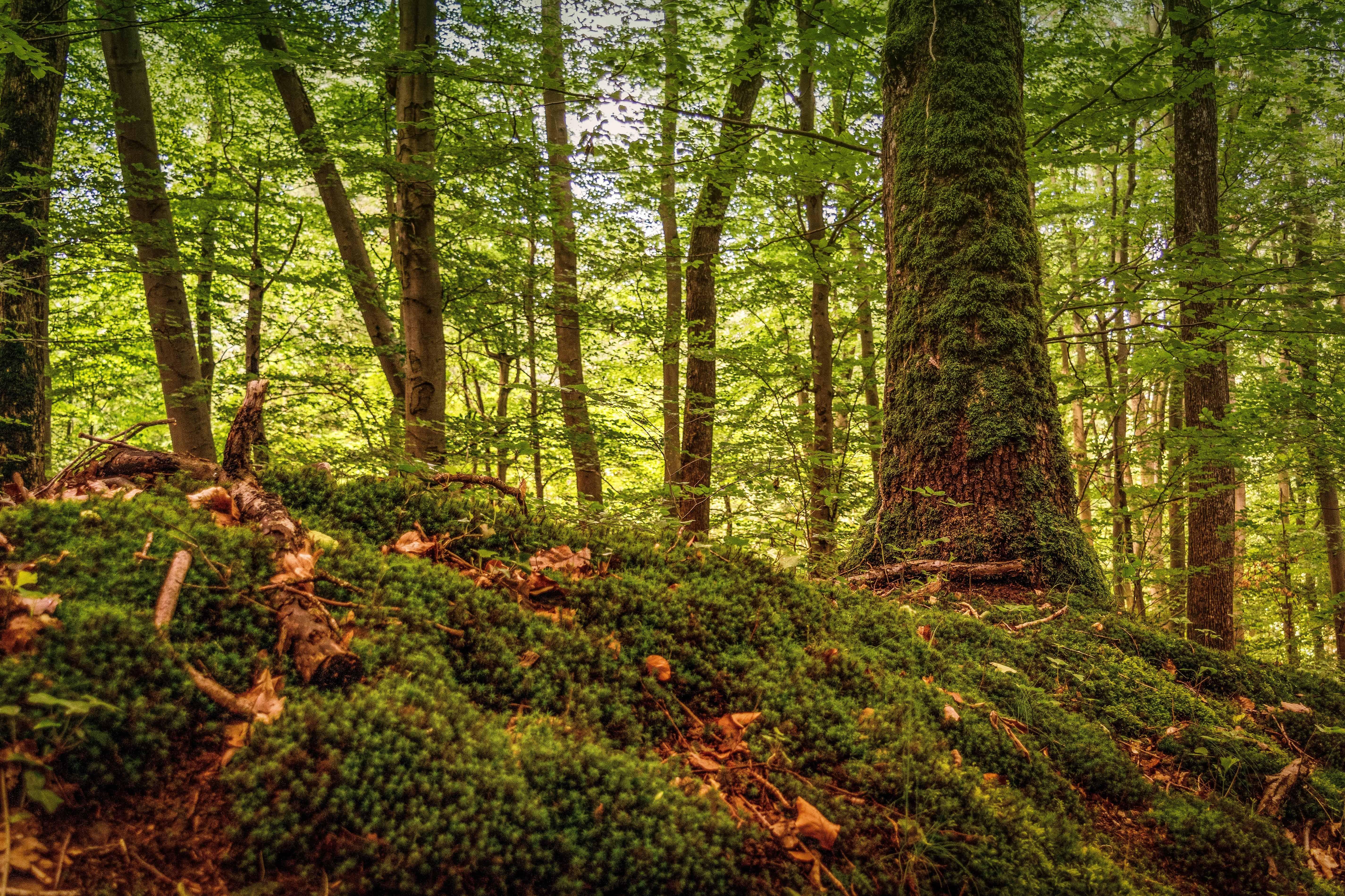 91 Gambar Pemandangan Hutan Dan Hewan HD