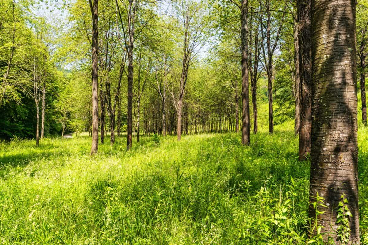 forest, leaf, green grass, landscape, environment, wood, summer, tree, nature