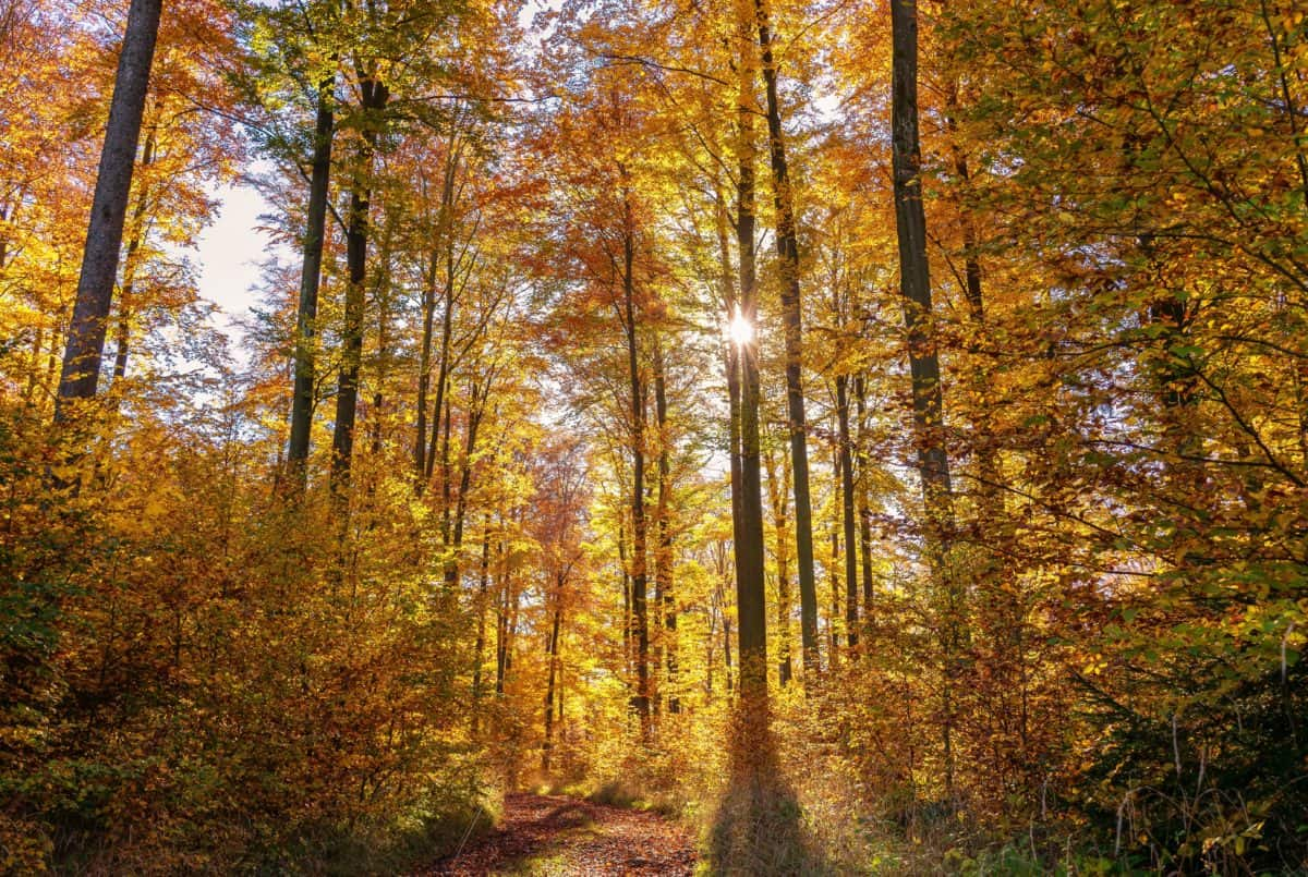 autumn, tree, leaf, wood, landscape, nature, forest