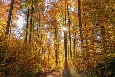 otoño, árbol, hoja, madera, paisaje, naturaleza, bosque