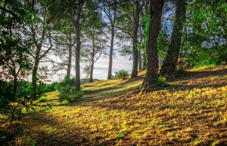 landscape, nature, tree, hill, wood, forest, plant, grass