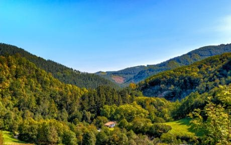 sky, nature, wood, mountain, landscape, tree, valley, forest