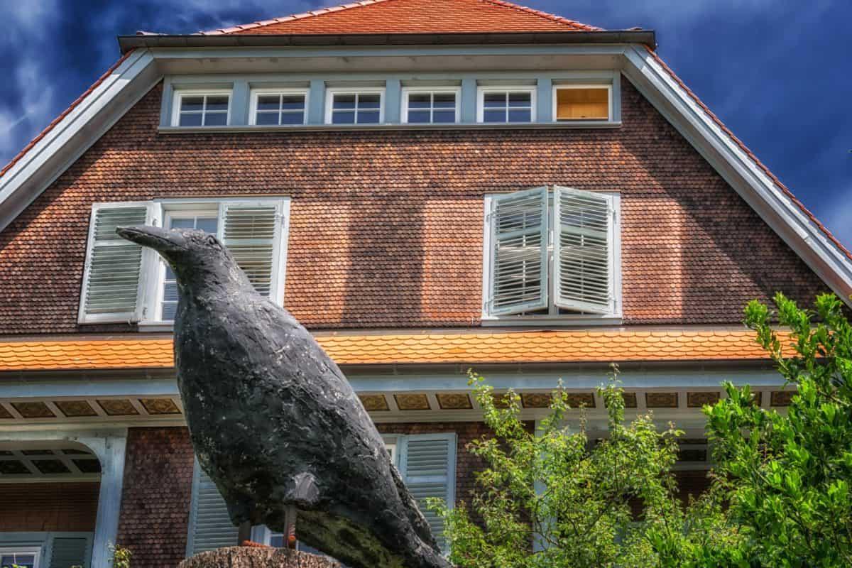 dom, fasada, prozora, arhitektura, krov, ptica, vrana