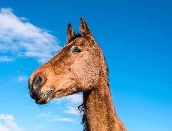 nature, animaux, cavalerie, bétail, portrait, tête, ciel bleu