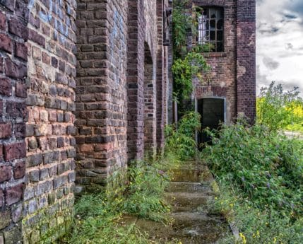 old, house, window, architecture, brick, wall, plant