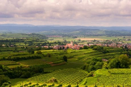 vineyard, agriculture, landscape, nature, hill, countryside