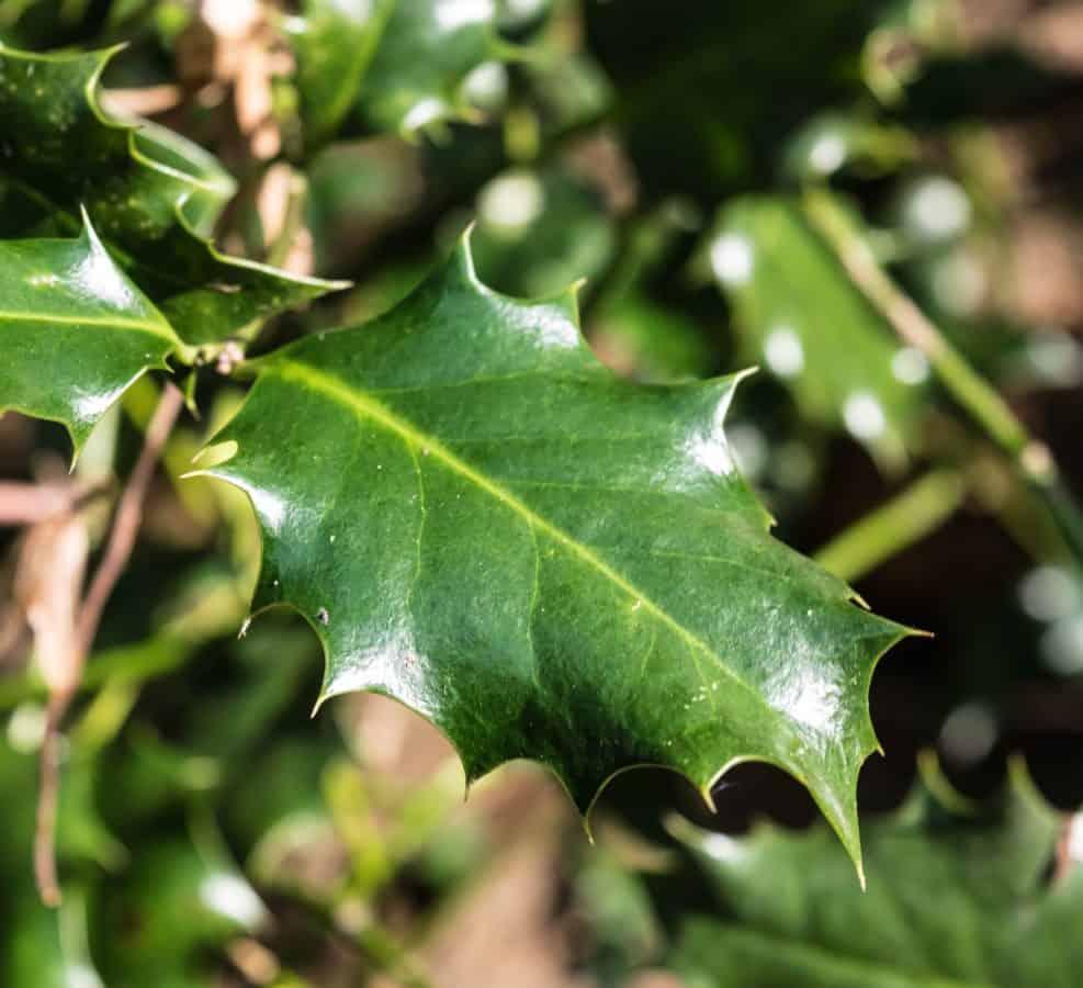 Flora, Baum, Natur, Blatt, Pflanze, im freien