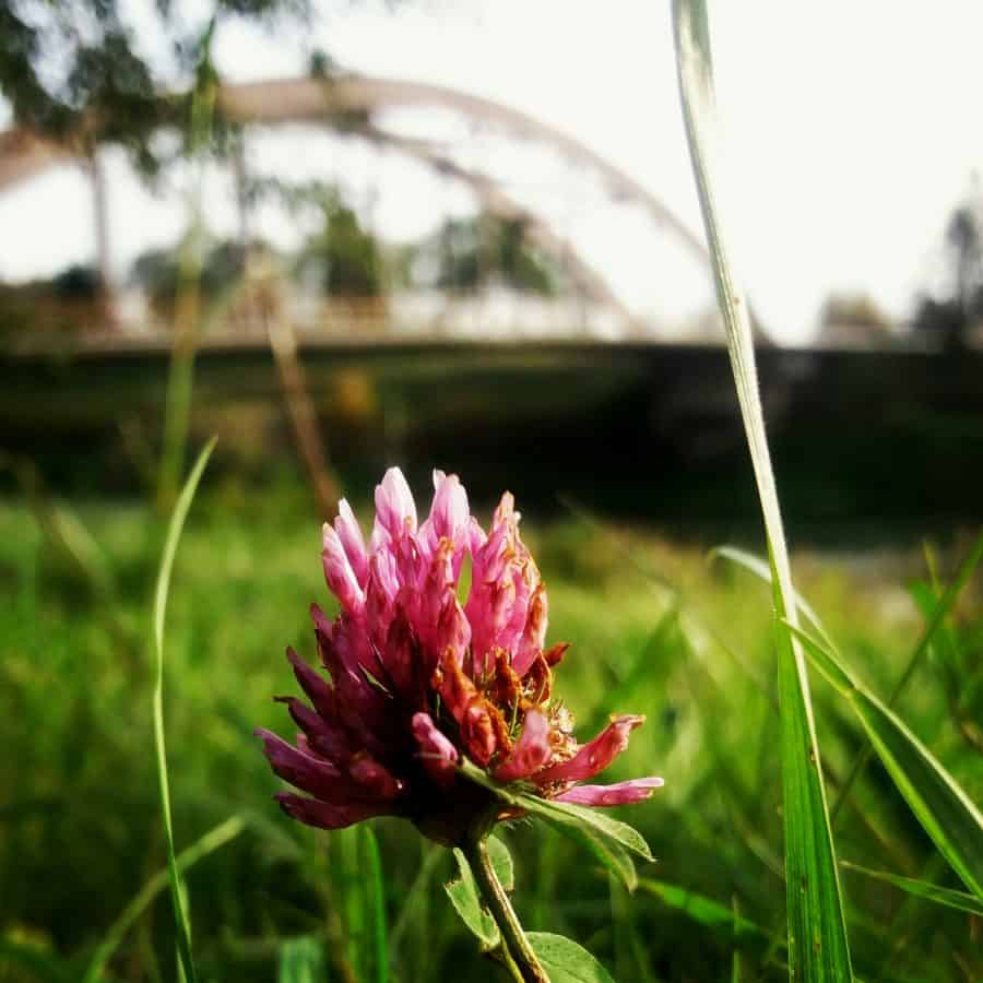 jardín, naturaleza, flores silvestres, hierba, flora, verano, campo, flor