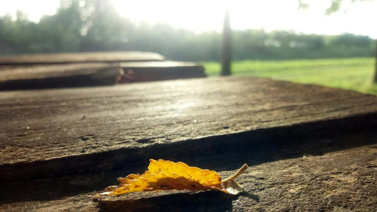 landscape, leaf, autumn, daylight, wood, outdoor