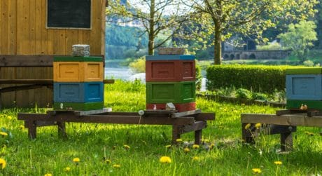 summer, beehive, nature, wood, bee, grass, apiary