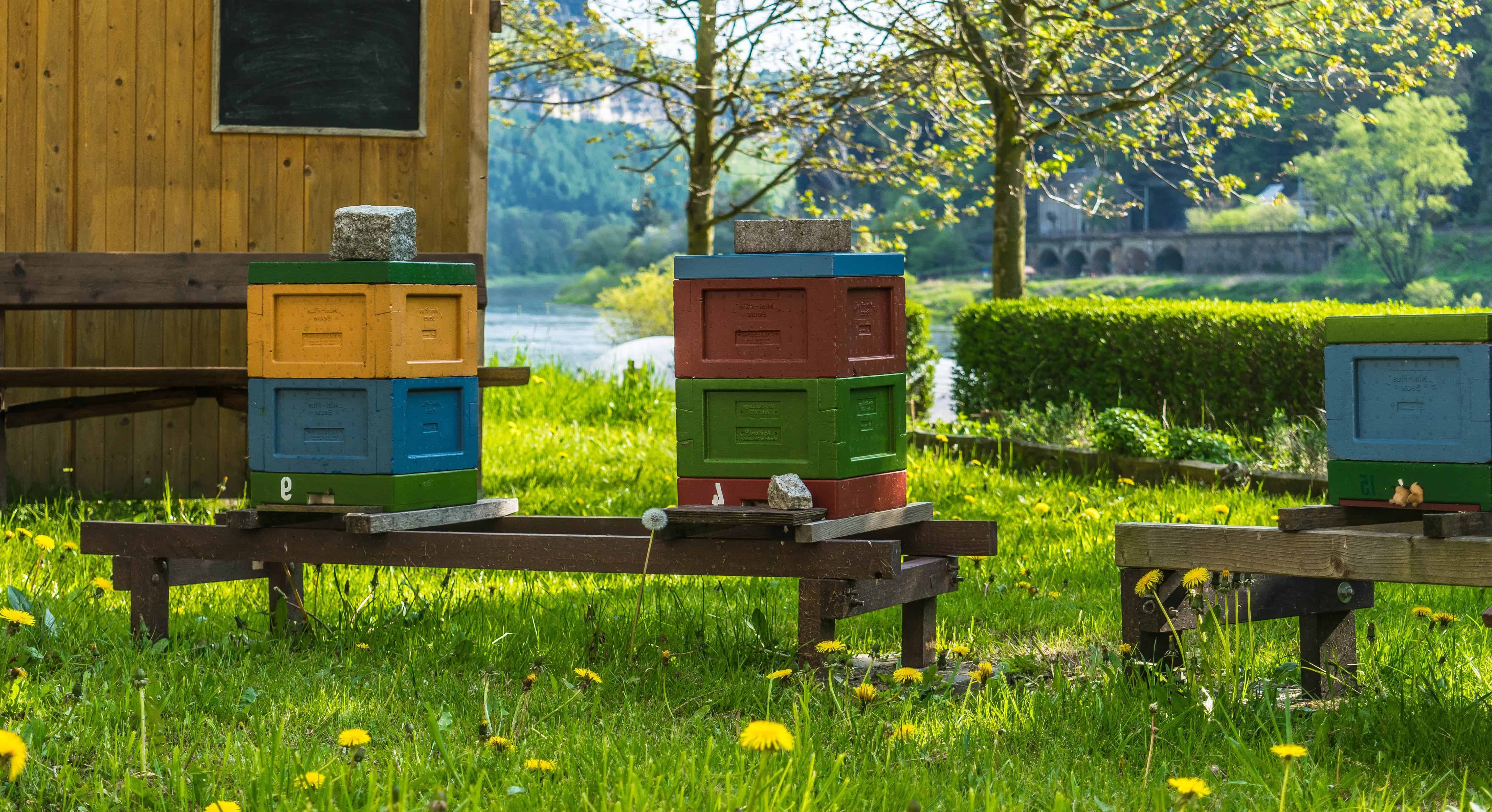 Free Picture Summer Beehive Nature Wood Bee Grass