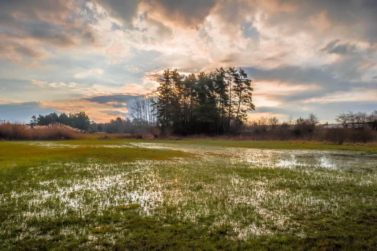 pantano, paisaje, naturaleza, amanecer, hierba, cielo, ambiente, árbol, campo