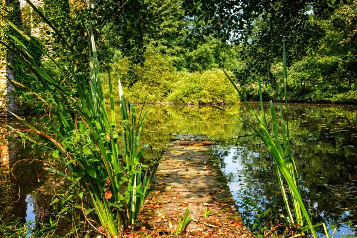 palude, paesaggio, flora, foglia, legno, estate, ambiente, natura