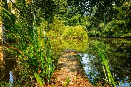 swamp, landscape, leaf, flora, wood, summer, environment, nature