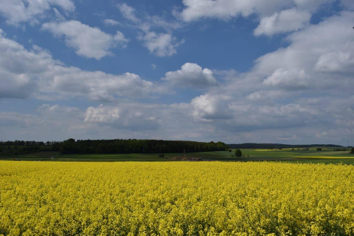 поле, провинцията, небе, пейзаж, природа, селското стопанство, рапица