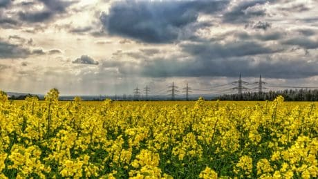 field, oil, rapeseed, agriculture, landscape, oilseed, sky
