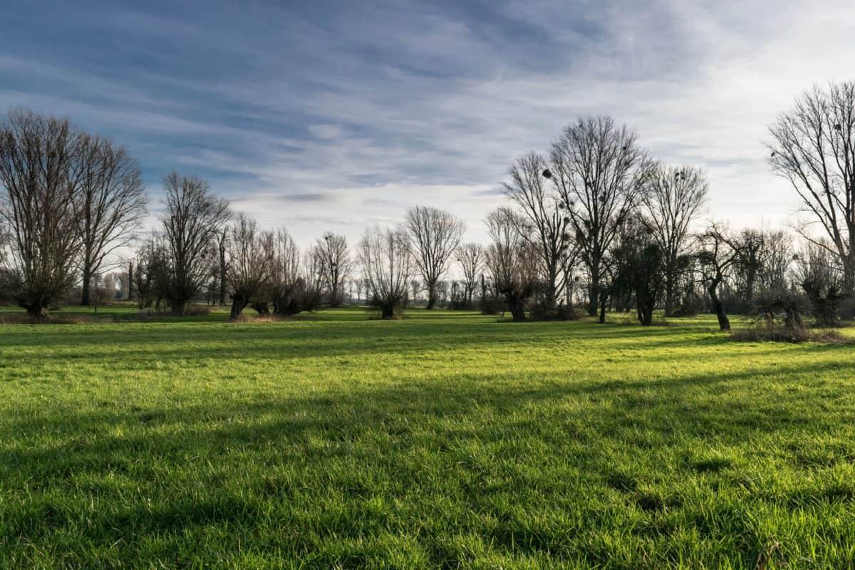 paysage, champ, arbre, herbe, ciel bleu, pré, été, nuage