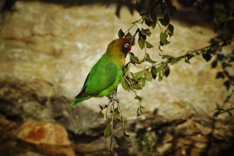 природа, тропичен птица, дивата природа, дърво, клюн, перо, дивата природа, животно
