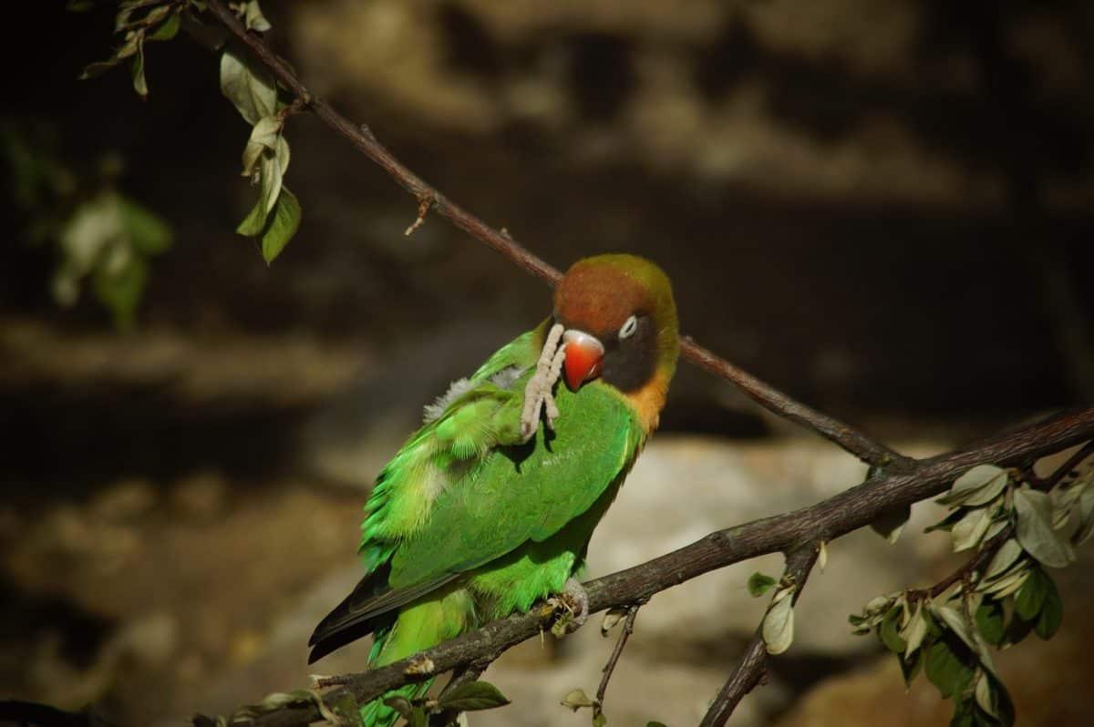 Natur, Tierwelt, Vogel, Papagei, Schnabel, Federn, Tier, wild
