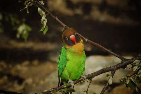 oiseau exotique, coloré, la faune, nature, animal, sauvage, forêt tropicale
