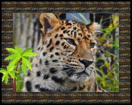 photomontage, animal, predator, hunter, wildlife, fur, safari, carnivore