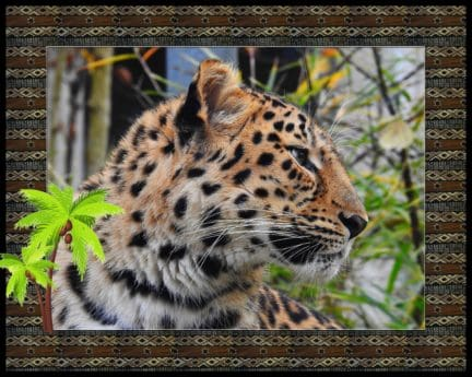 leopard, photomontage, frame, animal, wildlife, predator, cat, carnivore