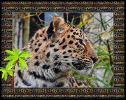 leopardo, fotomontaje, marco, animal, fauna, depredador, gato, carnívoro