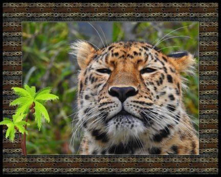 animal, photomontage, predator, carnivore, wildlife, leopard, safari