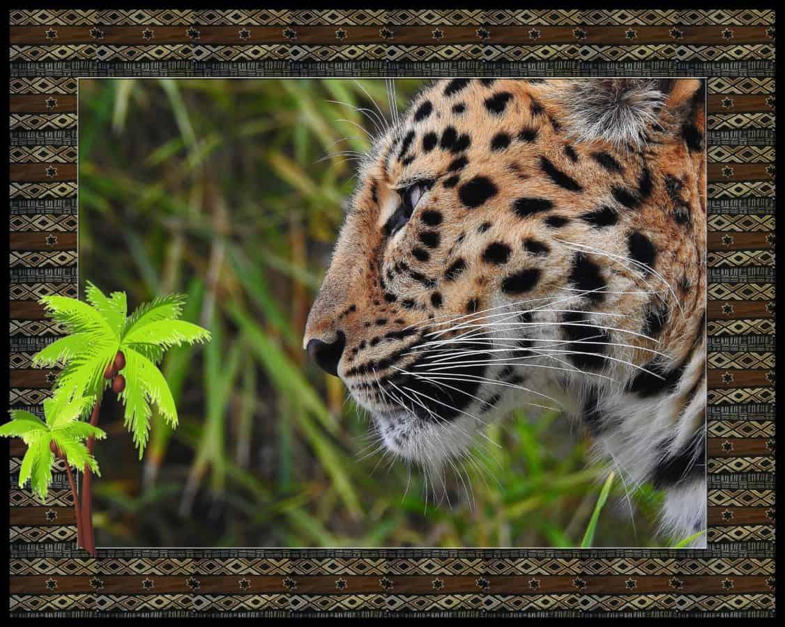 photomontage, léopard, sauvage, nature, predator, fourrure, animaux, faune